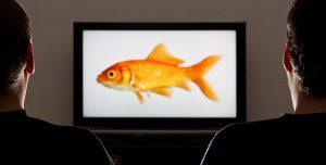 Video-Content – Bewegte Bilder in der Healthcare Communication